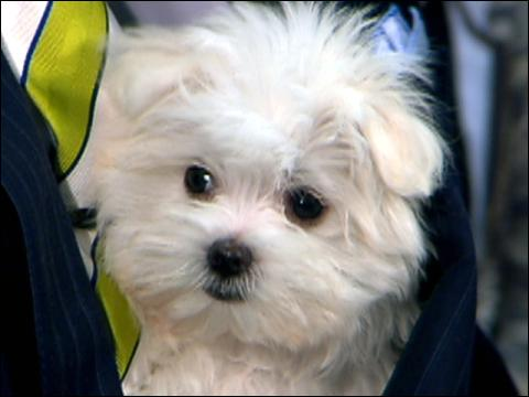 Online Scam Targets Pet Lovers