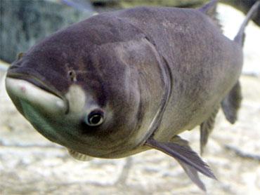 http://wwwimage.cbsnews.com/images/2009/12/02/image5868309x.jpg