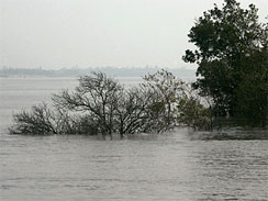 This photo taken Thursday, Dec. 3, 2009 shows mangrove trees submerged in the river water in Sundarban delta, about 1487 miles south of Calcutta, India.