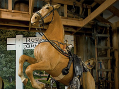 Trigger, the horse of singing cowboy Roy Rogers, is among the items from the Rpy Rogers and Dale Evans Museum being auctioned by Christie's.