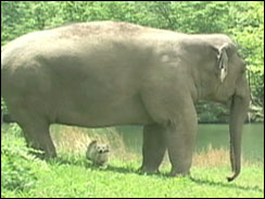 Tarra the elephant and Bella the dog
